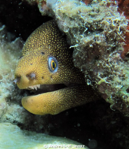 Spotted Eel ! by Andres L-M_larraz