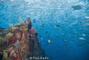 Fish Soup Tulamben Wreck Bali, Indonesia by Tom Radio