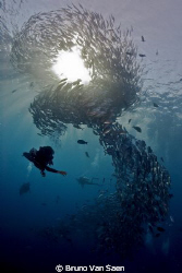 School of Jacks on the Liberty in Bali by Bruno Van Saen