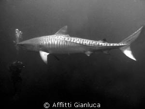 big tiger........... by Afflitti Gianluca