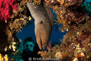Giant moray by Erich Reboucas