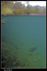 Life beneath surface :-D by Daniel Strub