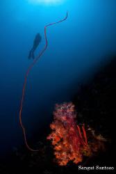 Cling Diver by Sangut Santoso
