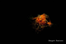 """Hot Orange"" by Sangut Santoso"