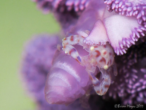 Hiding in a purple patch. by Brian Mayes
