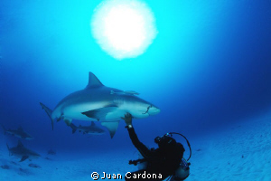 bull shark dive by Juan Cardona