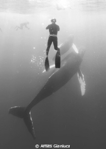 whales on the surface by Afflitti Gianluca