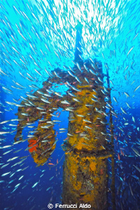 Milford Haven Wreck in Genoa Italy I use my D700 with 14... by Ferrucci Aldo