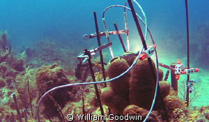 I was at Aquarius to photograph and video the sponge rese... by William Goodwin