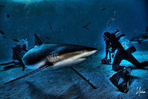 Hey there is a shark behind you! Sharks in HDR! by Steven Anderson