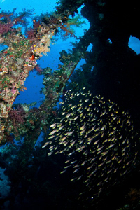 An image from inside the wreck of the Carnatic; a school ... by Paul Colley