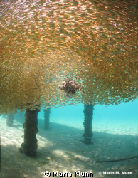 This shot was taken in just 2 metres of water in Nuweiba.... by Maria Munn