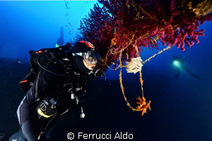 Take on Donator /Proper Schiaffino Wreck in Porquerolles ... by Ferrucci Aldo