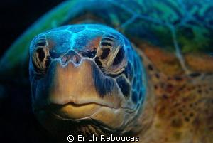 Turtle portrait II by Erich Reboucas