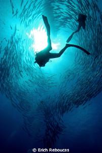 Barracuda show by Erich Reboucas