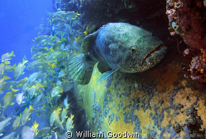Taken at the Aquarius undersea habitat/laboratory diving ... by William Goodwin