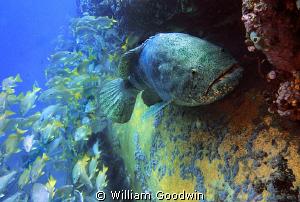 Taken at the Aquarius undersea habitat/laboratory diving ... by William Goodwin