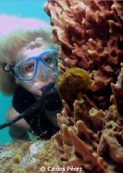 Froggie view of a Blondie diver At Crash Boat Beach Aguad... by Carlos Pérez