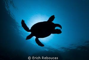 Turtle Eclipse by Erich Reboucas