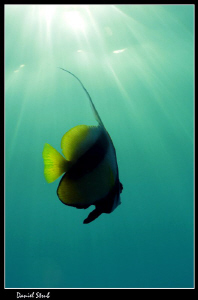 Natural light :-D by Daniel Strub
