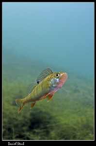 Wonderful diving in our ponds :-D by Daniel Strub