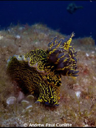 took this towards the end of a great dive in Lanzarote wi... by Andrew Paul Cunliffe