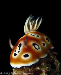 chromodoris leopardus with a rare smile between the rhino... by Ricardo Gonzalez