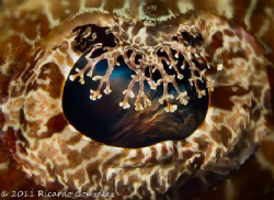 Crocodile fish eye close up with a sunset on its mind by Ricardo Gonzalez