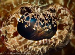 Crocodile fish eye close up with a sunset on its mind by Ricardo Gonzalez
