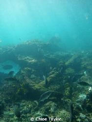 Abrolhos Islands. by Chloe Taylor
