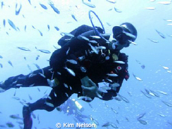 Swimming with the fishes. by Kim Nelson