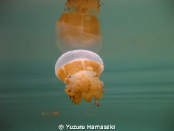 This is taken in a lake in Indonesia. The water is salty ... by Yuzuru Hamasaki
