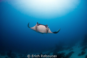 I hear bubbles, see the big blue, feel wings pass by... h... by Erich Reboucas
