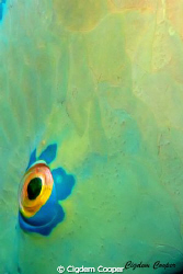 detail of the parrotfish by Cigdem Cooper