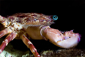 crab at night ;-) by Rico Besserdich