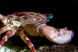 crab at night ;-) by Rico Besserdich