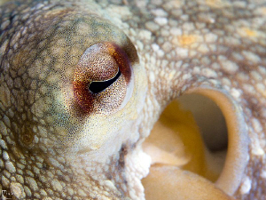 Close view to an octopus. Very cool, friendly & extremly ... by Rico Besserdich