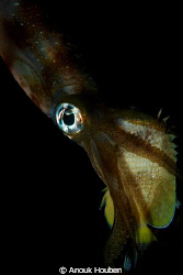 Squid with its catch. by Anouk Houben
