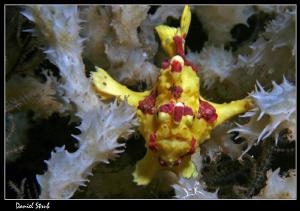 Froggy :-D in Apo Island by Daniel Strub