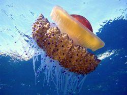 medusa by Thorsten Schulz