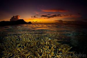Psychedelic Sea: Staghorn under the Influence by Tony Cherbas
