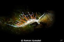 Flying snail by Roman Vyroubal