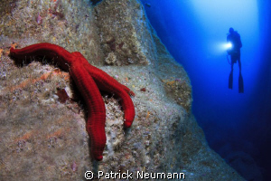 Seastar @ Azores, Portugal by Patrick Neumann