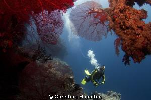 In the Grotto by Christine Hamilton