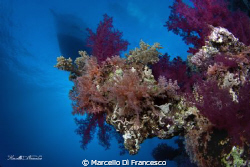 """Under the Bridge"" soft coral shoted wiht Eos450d + tokin... by Marcello Di Francesco"