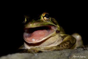 Big mouth !!! by Raoul Caprez