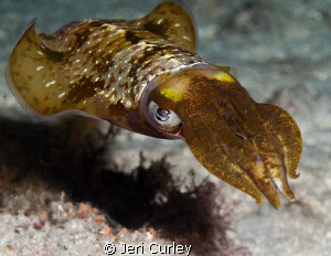 Caught my reflection in the eye of  this squid that hung ... by Jeri Curley
