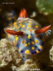 Nudi Pride by Marcello Di Francesco
