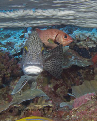 a nice second day diving in Niue with some friends. Canon... by Andrew Macleod