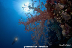 Soft coral at Saint john reef during a mornig dive. by Marcello Di Francesco